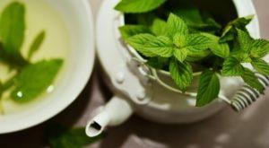 Medovka lekárska - liečivý čaj