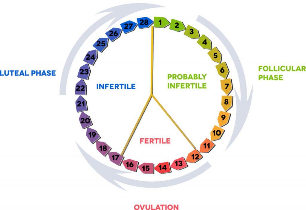 Menštruačný cyklus, folikulárna fáza, luteálna fáza a ovulácia zobrazené kruhovo v priebehu dní