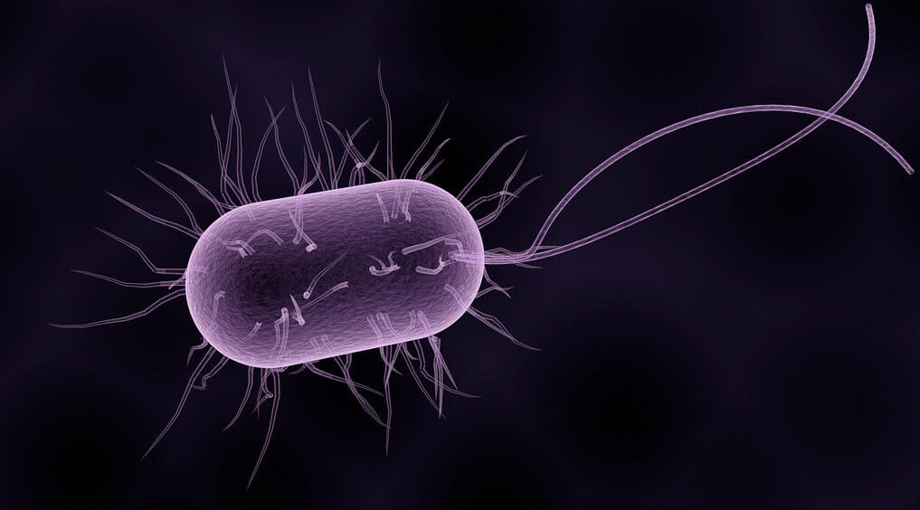 Baktéria