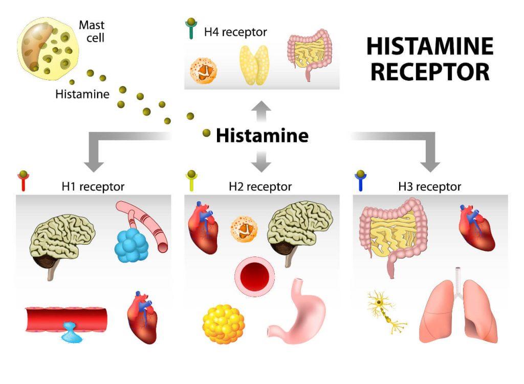 Histamínové receptory