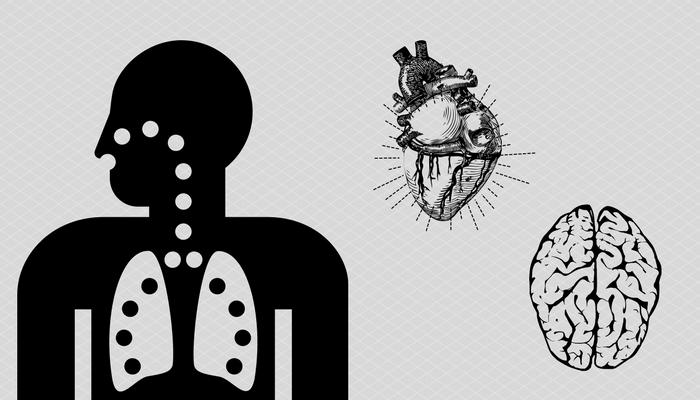Histamínové receptory v dýchacích cestách, srdci, mozgu