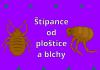 Štípance od ploštice a blchy