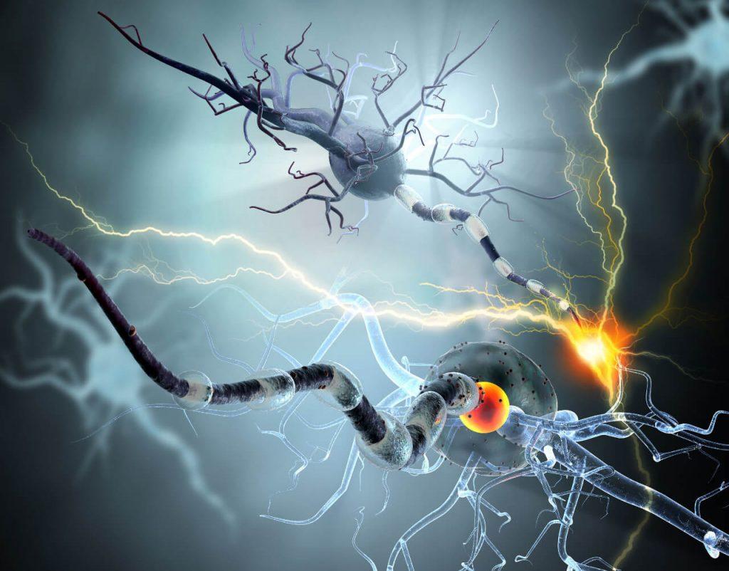 Autoimunitné ochorenia nervov, neuróny