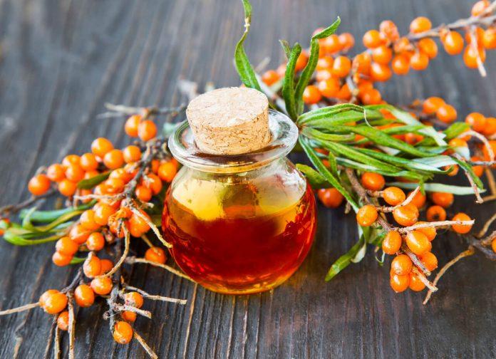 Rakytníkový olej - Rakytník rešetliakový