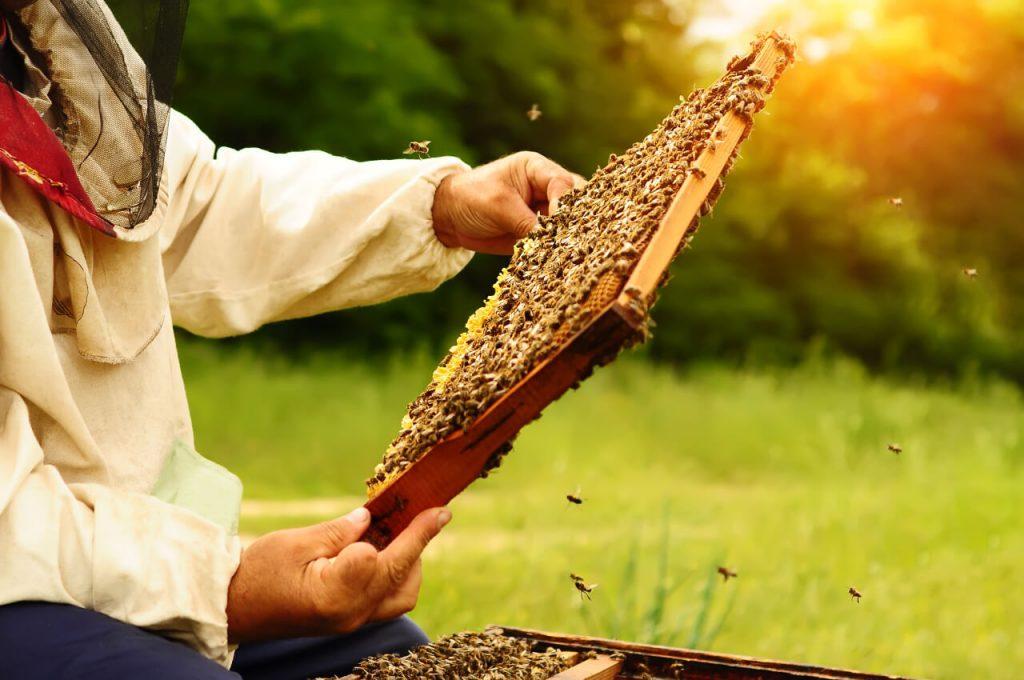 Med - stáčanie medu